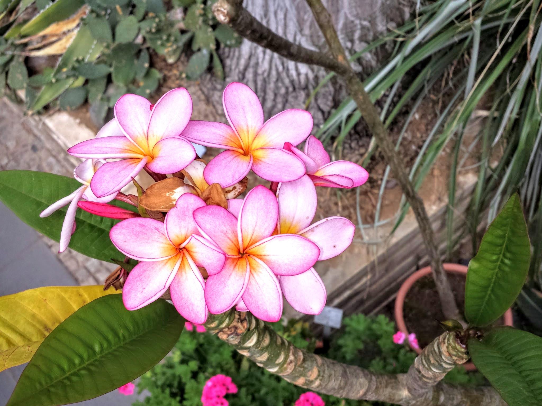 Blumen Mona Bergs